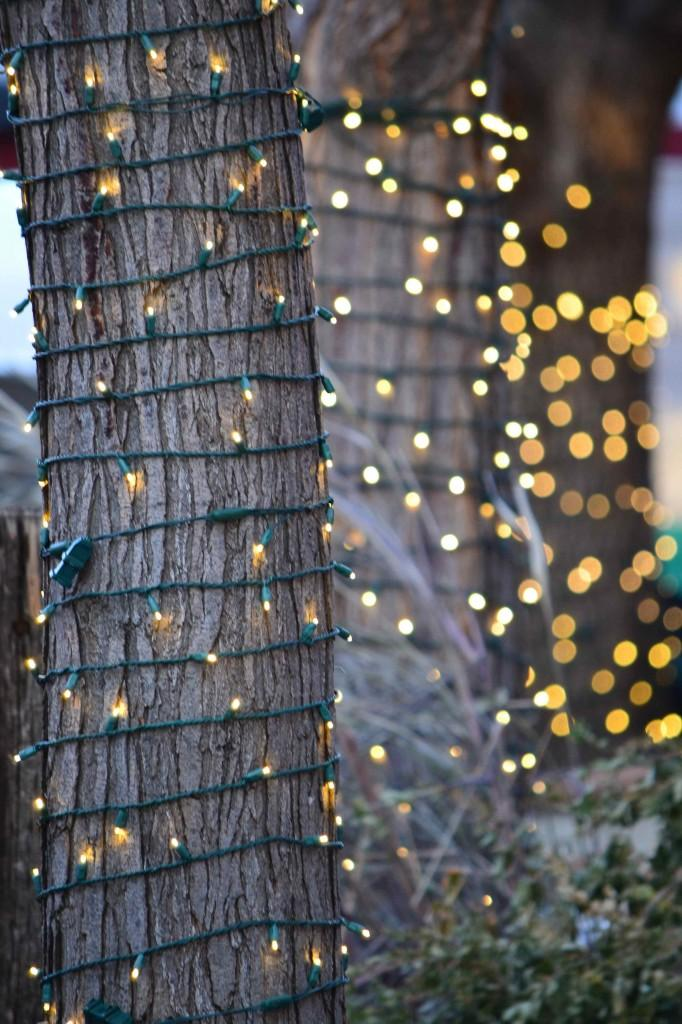 tree trunks wrapped with fairy lights