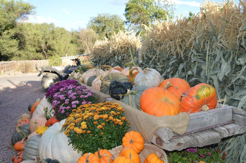 boxes of pumpkins outside the corn maze