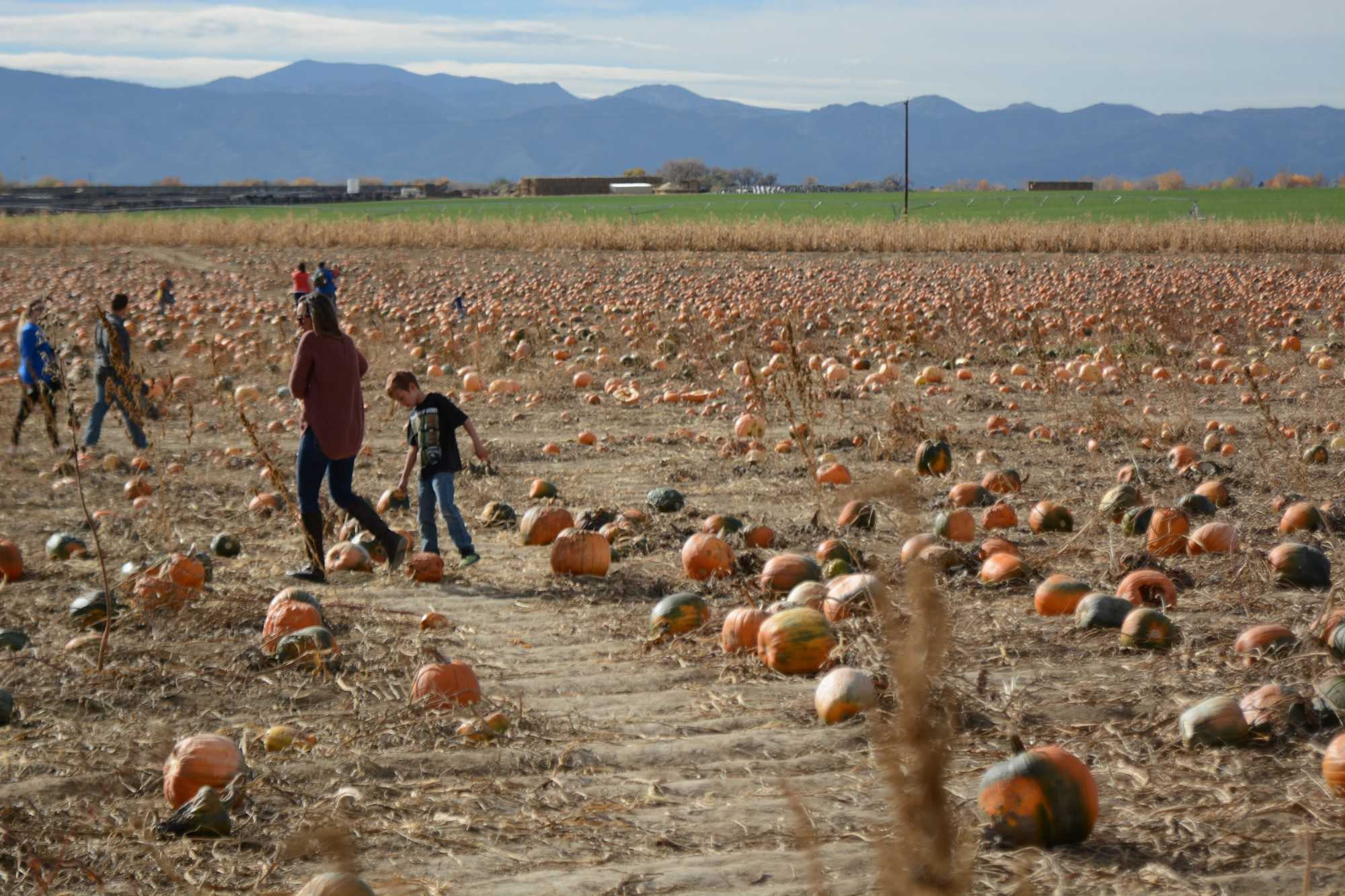 People enjoying a wonderful day at a pumpkin patch in Fort Collins, Colorado. Photo credit: Mackenzie Boltz