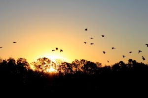 Birds scatter across the sunrise giving the opportunity for symbolism. Photo credit: Kelly Peterson