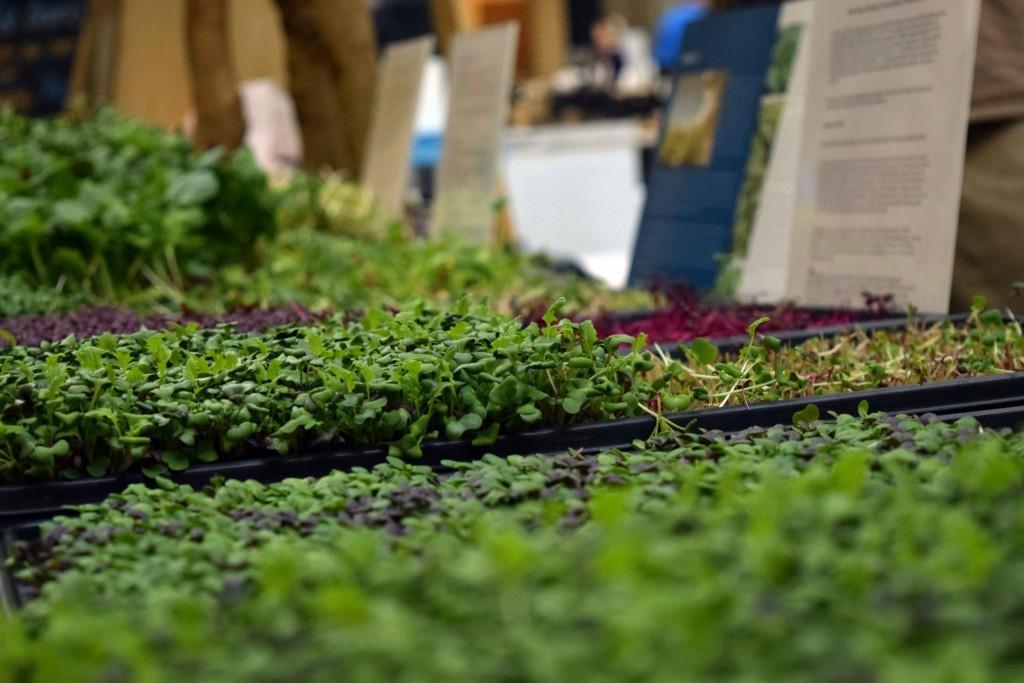 Westbridge Farms display of greens